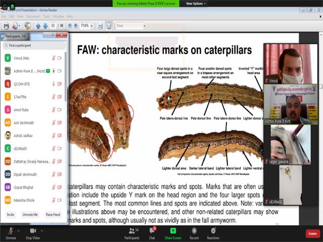 IPM on FAW- Online training